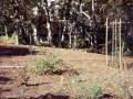 Fern---first-plantings02