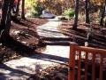 Fern---new-walk-to-street01